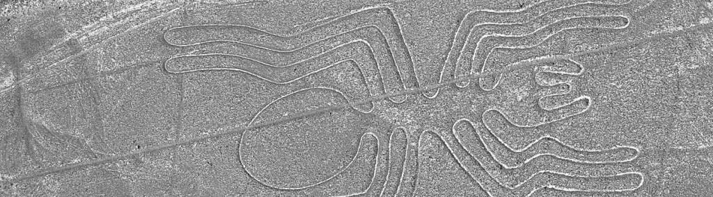 Nazca-Spinne_1260x350